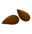 two seeds of apple fruit vector image