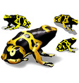 Yellow Banded Dart Poison Frog vector image