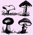 mushrooms edible inedible vector image vector image