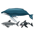 Different type of whale and shark vector image