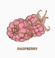 drawing raspberry hand draw for vector image