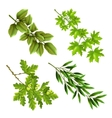 Green Branches Of Deciduous Trees vector image