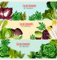 salad greens and leaf vegetables banner set vector image