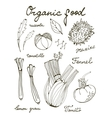 Outline set of fresh hand drawn vegetables vector image vector image