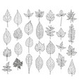 hand drawn leaves set vector image