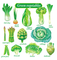 green vegetables vector image vector image
