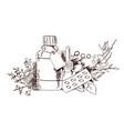 hand draw medicinal plants and medicine vector image