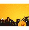 Halloween black cats and pumpkin vector image