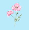 watercolor poppy flower vector image