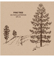 Young Pine Tree vector image