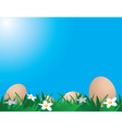 Chicken eggs on the grass vector image