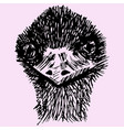 head of ostrich vector image