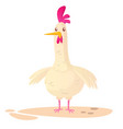 cartoon big fat hen chicken isolated on a white vector image