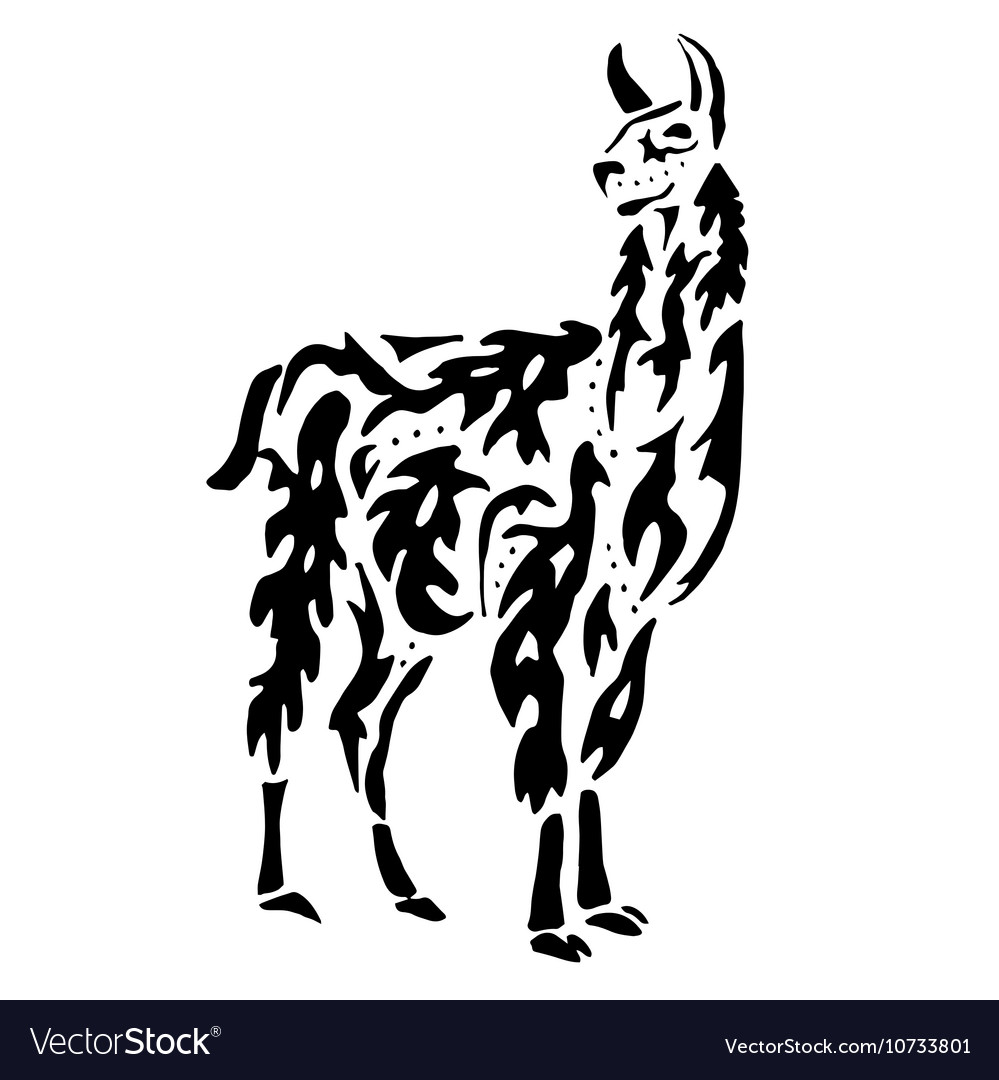 Lama drawing for coloring vector