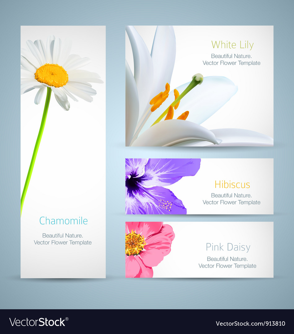 Flower blossom templates design vector