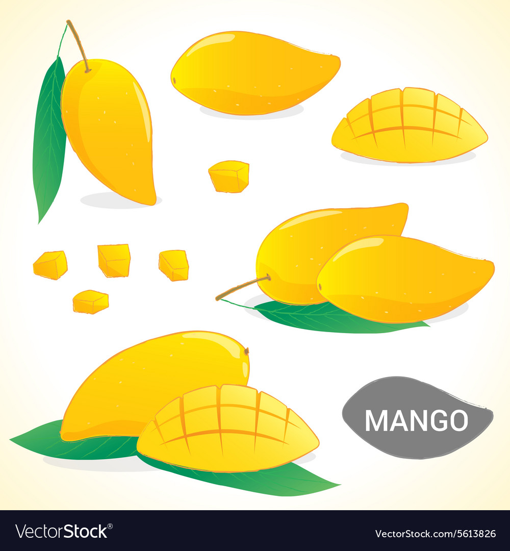 Set of mango in various styles and format vector