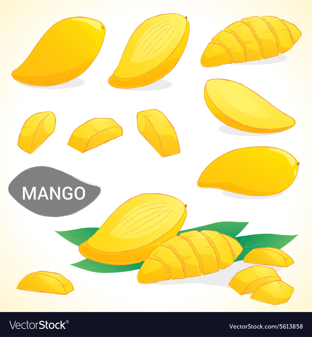 Set of mango in various styles vector
