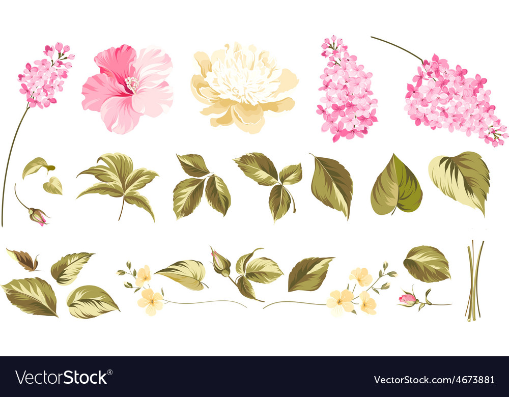 Elements of flower bouquets vector