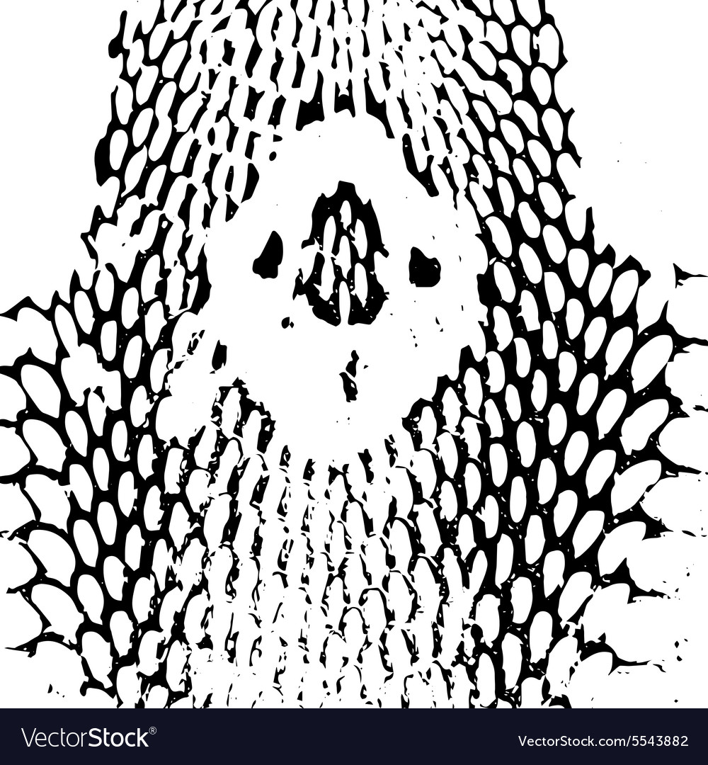 Cobra head snake skin abstract texture black on vector