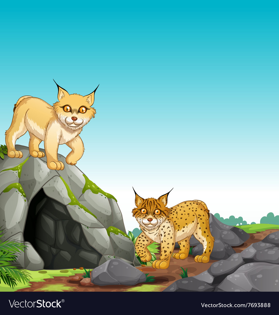 Two tigers living in the cave vector