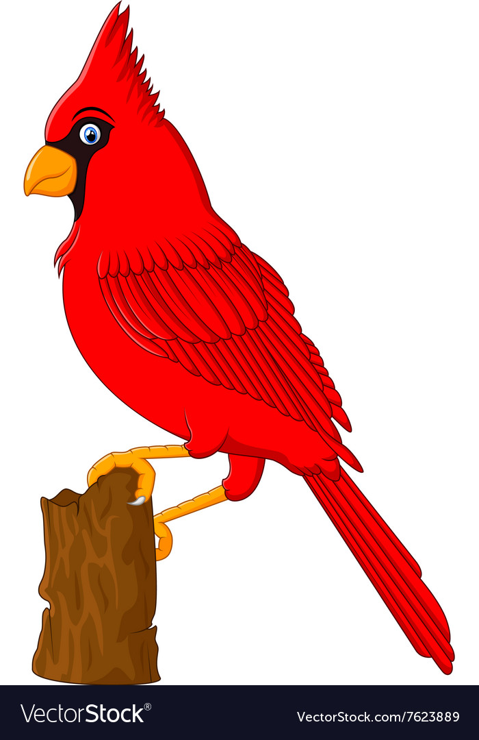 Red cardinal sitting on a tree branch vector