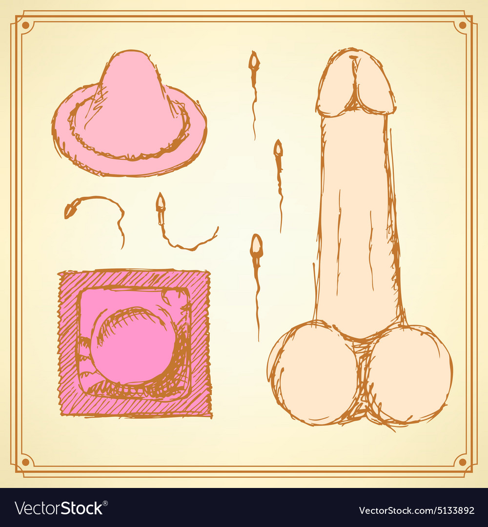 Sketch condoms and penis in vintage style vector