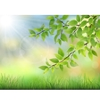 green leaves with water drops and grass vector image