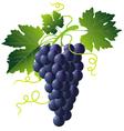 grape cartoons vector image