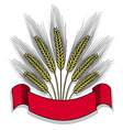 Isolated bunch of wheat with ribbon vector image
