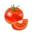 picture of tomato vector image