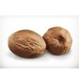 Nutmeg icons vector image