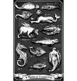 Vintage Set of Mythical Creatures on Blackboard vector image