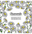 chamomile drawing frame isolated daisy vector image