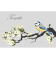 Tomtit on the cherry branch vector image
