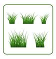 Green grass bushes isolated vector image vector image