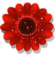 Red Gerbera vector image