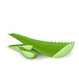 cut aloe leaves on white background vector image vector image