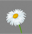 daisy isolated vector image