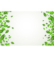Background with green leaves vector image