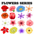 Different kind of flowers vector image