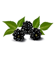 Fresh berries with leaves vector image