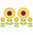 sunflower vector image