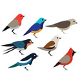 Set of birds design vector image vector image