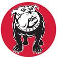 bulldog mongrel dog facing front vector image vector image
