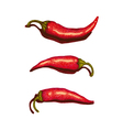 Chili Peppers vector image