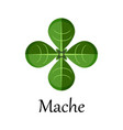 mache green salad leaves isolated on the white vector image