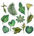 green hand drawn tropical plants set vector image vector image