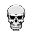 Gray human skull on white vector image