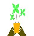 Flower pot on hands vector image