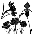 flowers Collection vector image